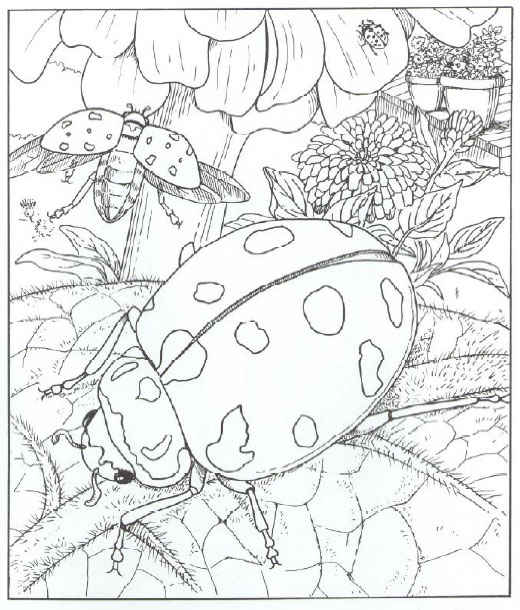 free coloring sheets of ladybugs