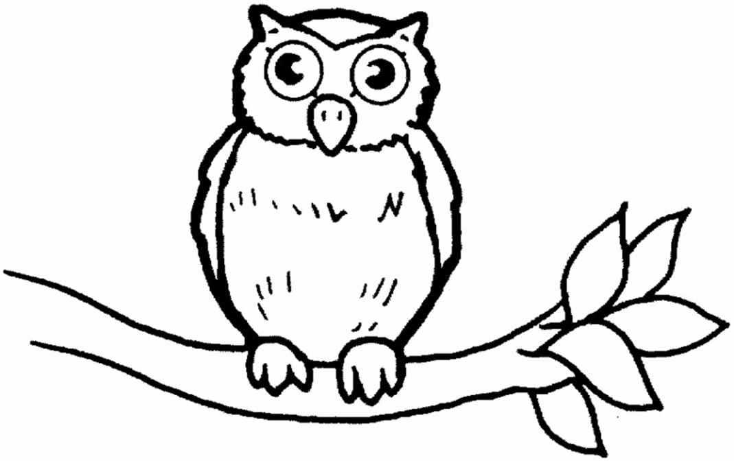 barn owl coloring pages printable