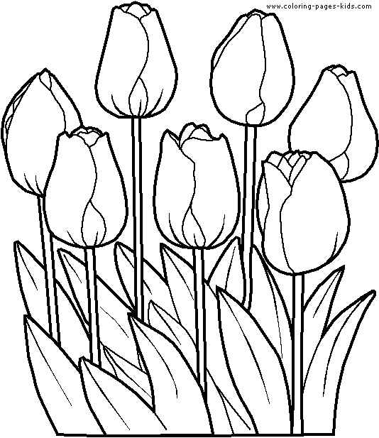 free printable coloring pages beautiful flowers