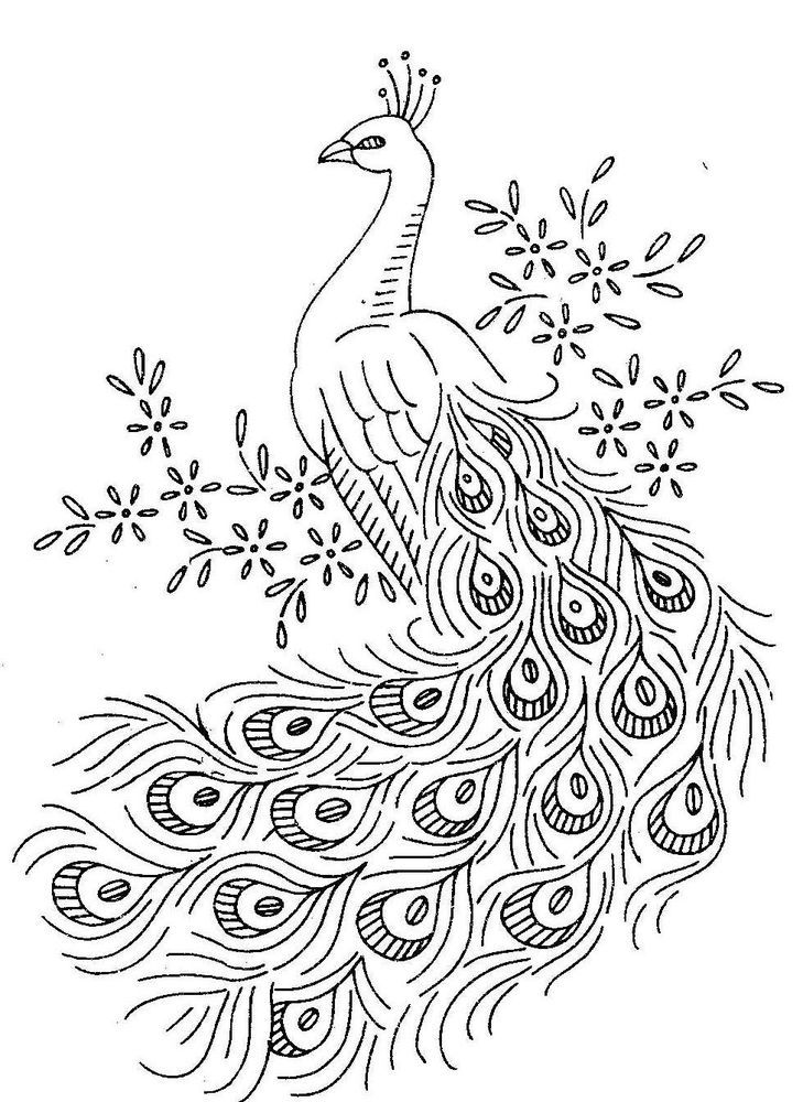 Peacock Birds Coloring Pages Peacock Coloring Page
