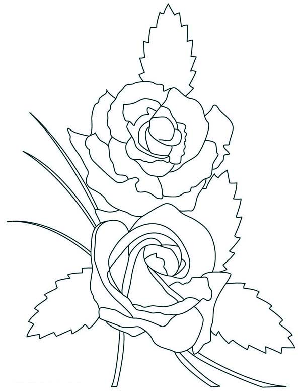 Beautiful-rose-coloring-pages