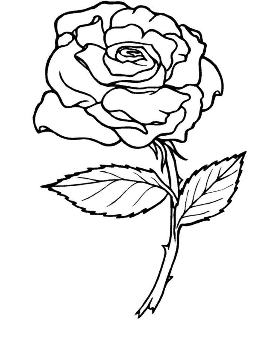 Rose_Coloring_Page-01