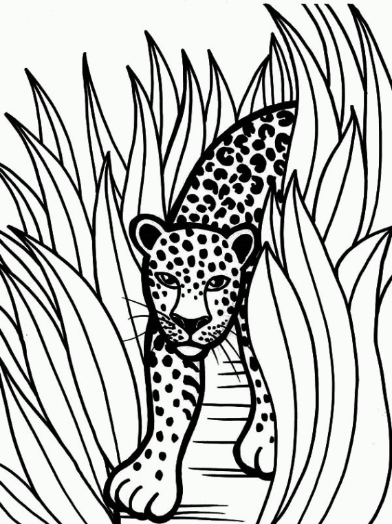 coloring pages baby jaguar - photo#26