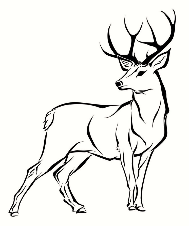 Deer Coloring Pages 03