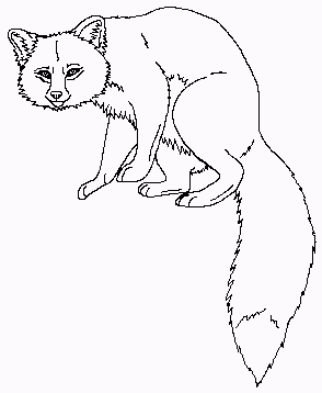 animal_fox_coloring_pages