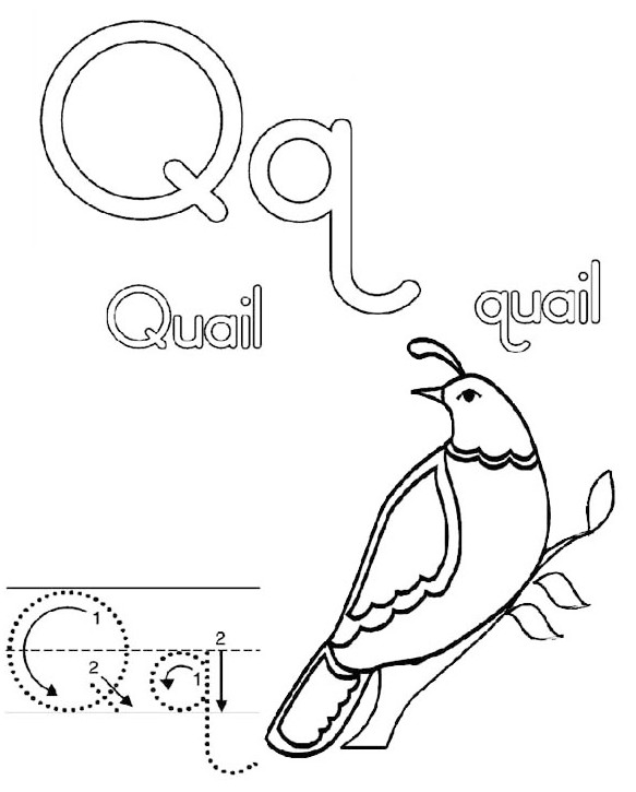 Letter-Q-for-Quail-California-coloring-page