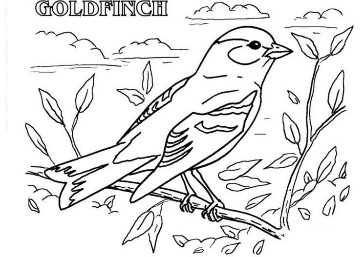 american-goldfinch-print-out-drawing