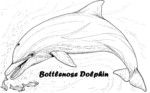 Bottlenose Dolphin Coloring Pages