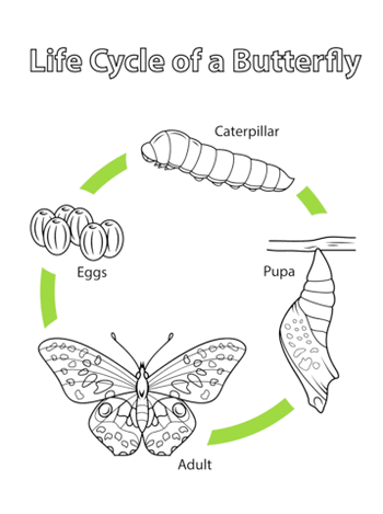 butterfly-life-cycle-coloring-page-clip-art