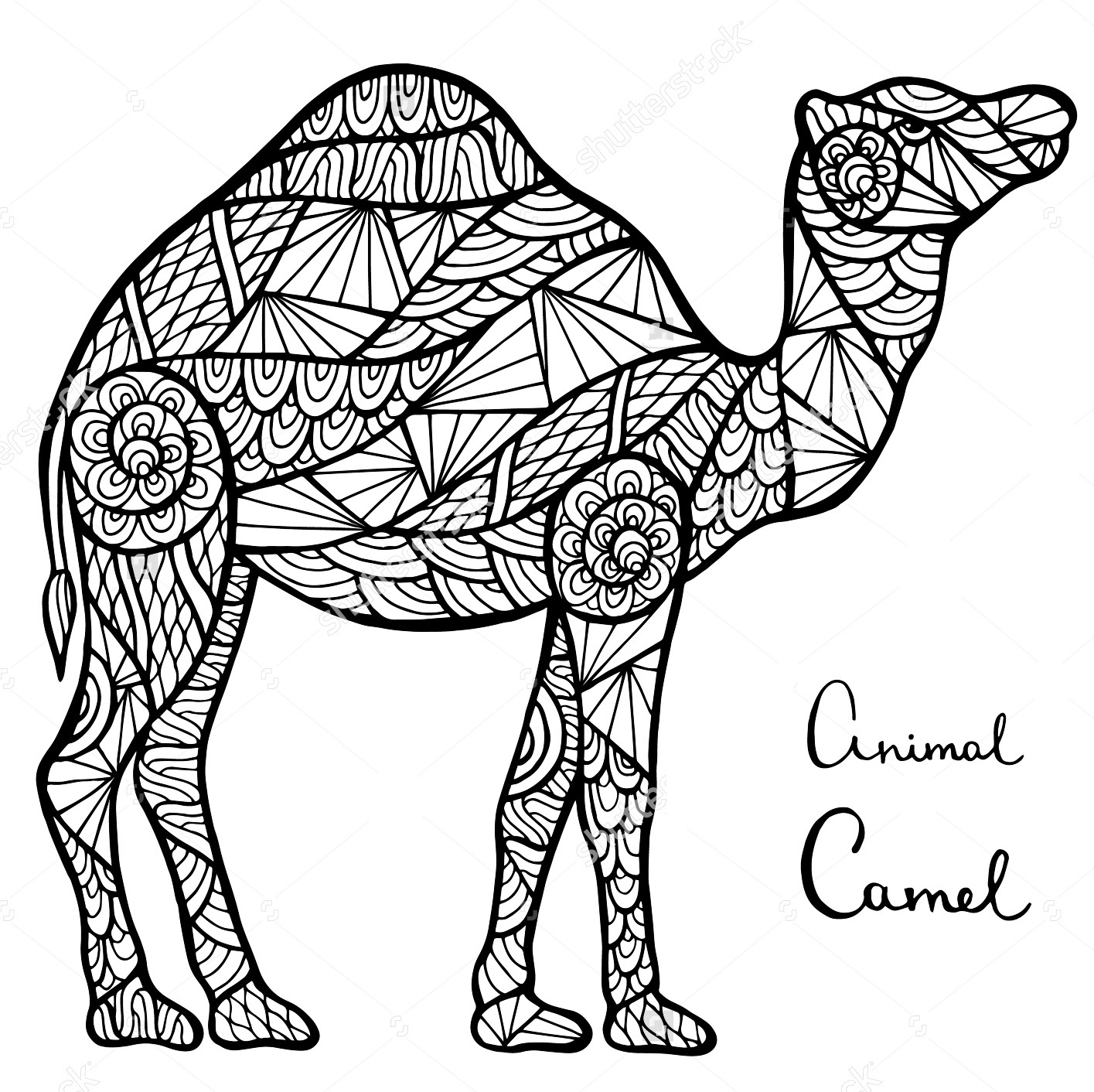 camel-zentangle-coloring-page
