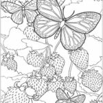 intricate-butterfly-coloring-sheet