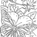 intricate-butterfly-coloring-sheet-to-print