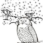 owl-winter-animal-coloring-picture