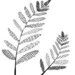 zentangle-leaves-worksheet