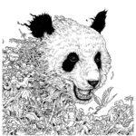 Imagimorphia-bear-coloring-book