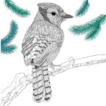 The-Aviary-Bird-Portraits-coloring-book