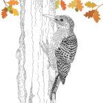 The-Aviary-Bird-Portraits-coloring-book-hummingbirds