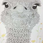 The-Aviary-Bird-Portraits-coloring-book-ostrich