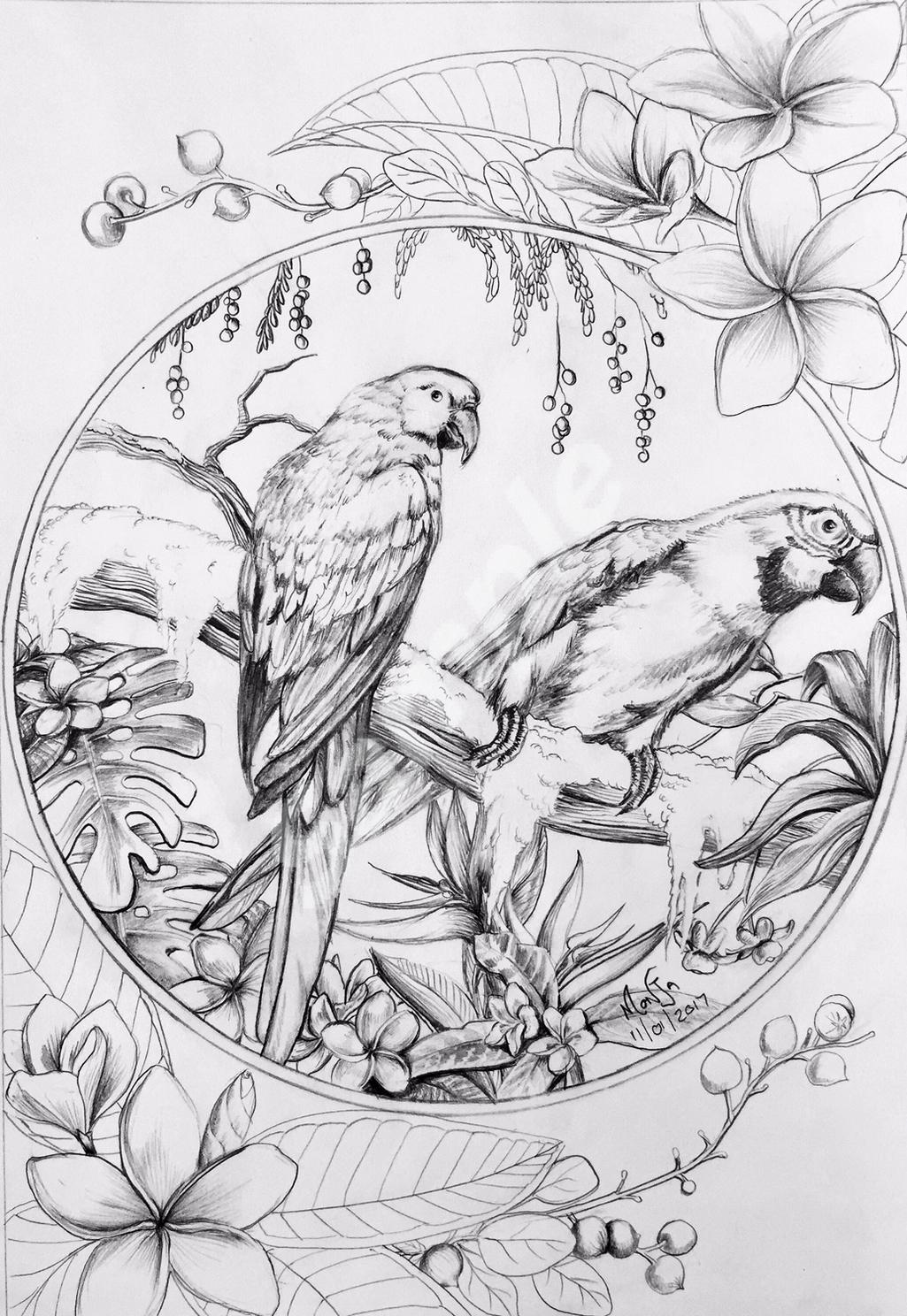 colour-my-dreams-coloring-book-birds
