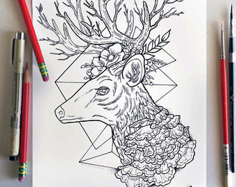 deer-coloring-book