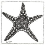 starfish-coloring-pictures