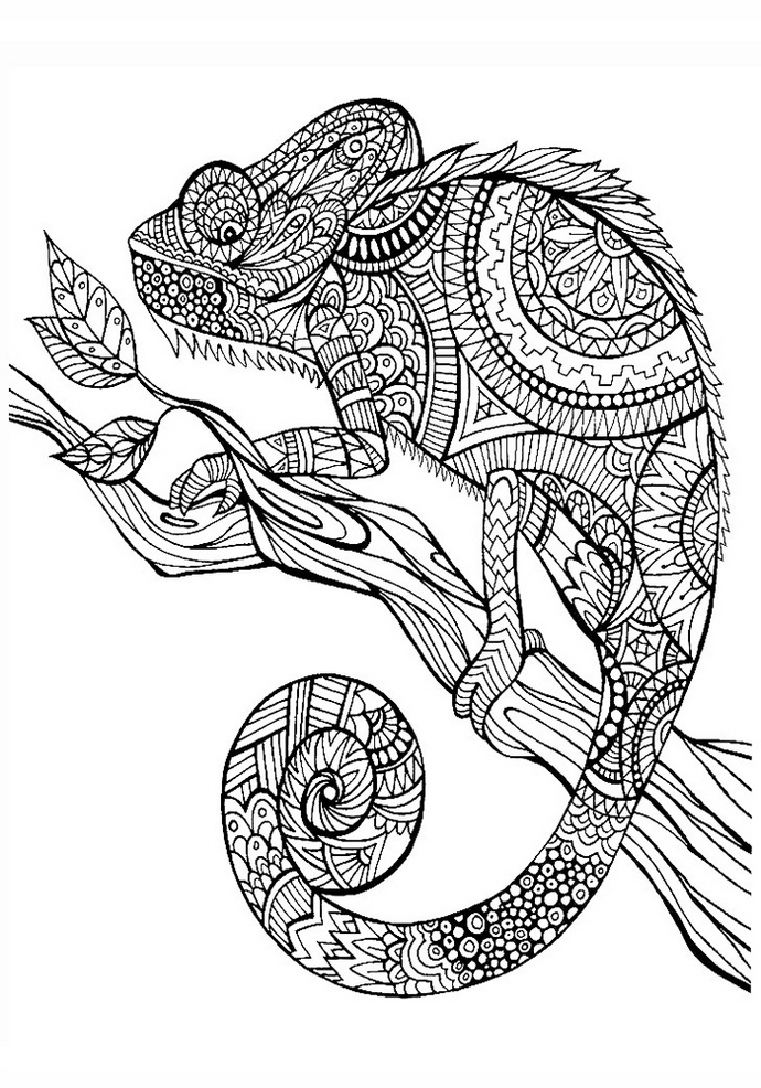 Animal Mandala Chameleon Coloring