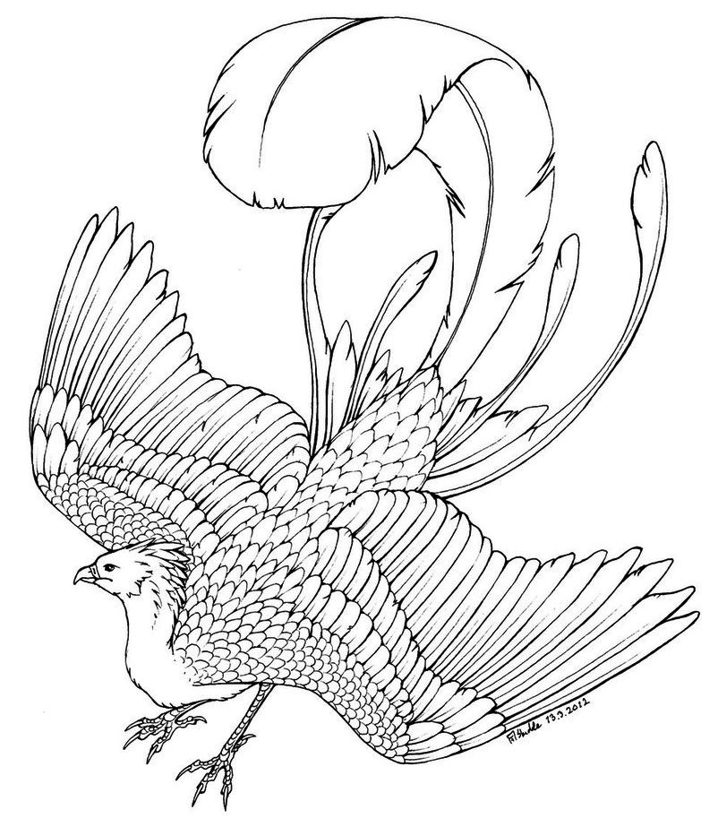 Phoenix Bird Coloring Page To Print