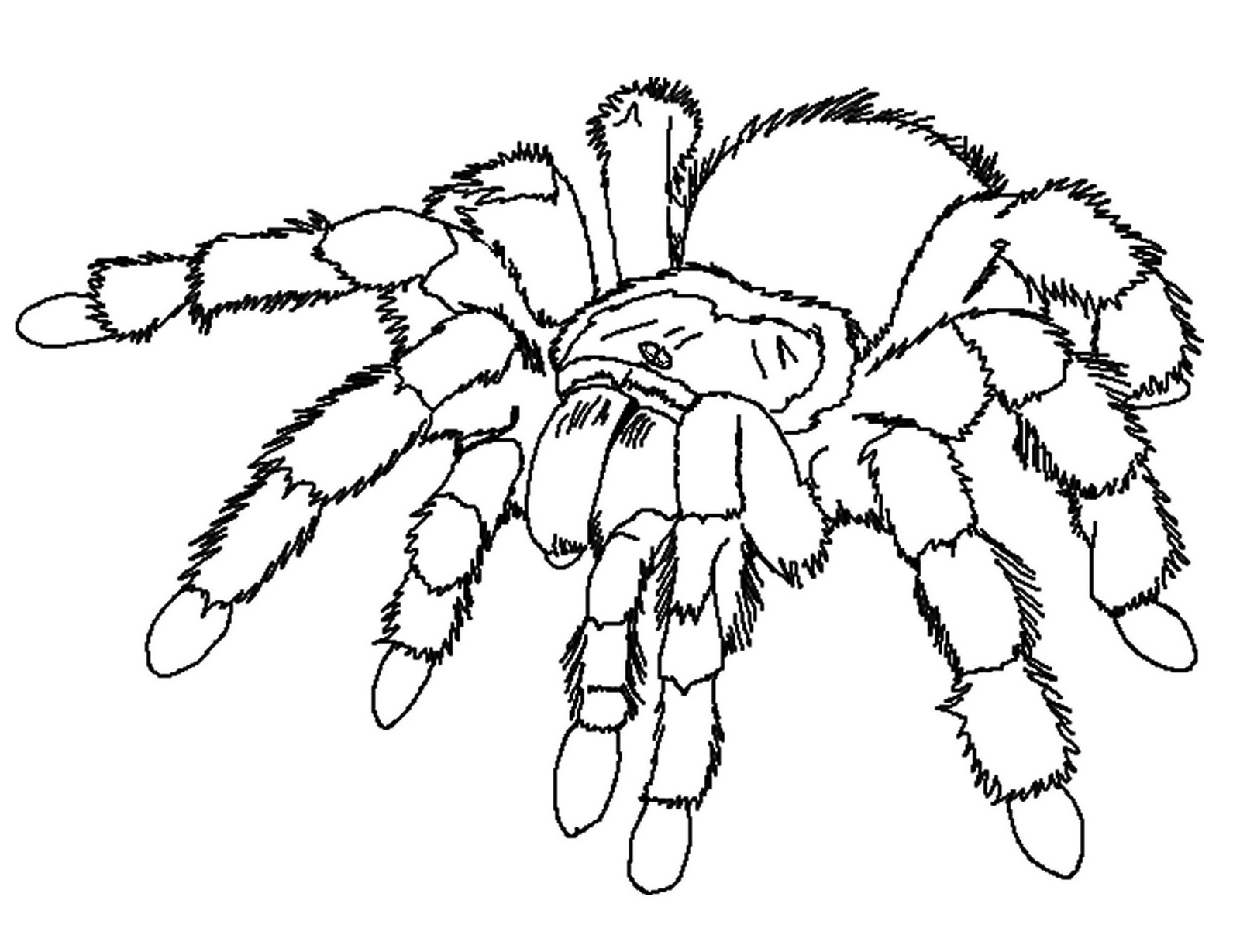 Realistic Spider Coloring Sheet