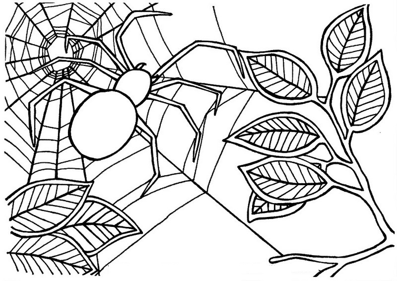 Spider Web Coloring And Drawing Insect