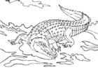 The Wild and Cute Crocodile Coloring Pages for All Ages