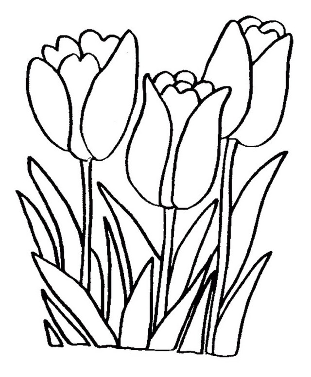 Tulip Coloring Book for Kids