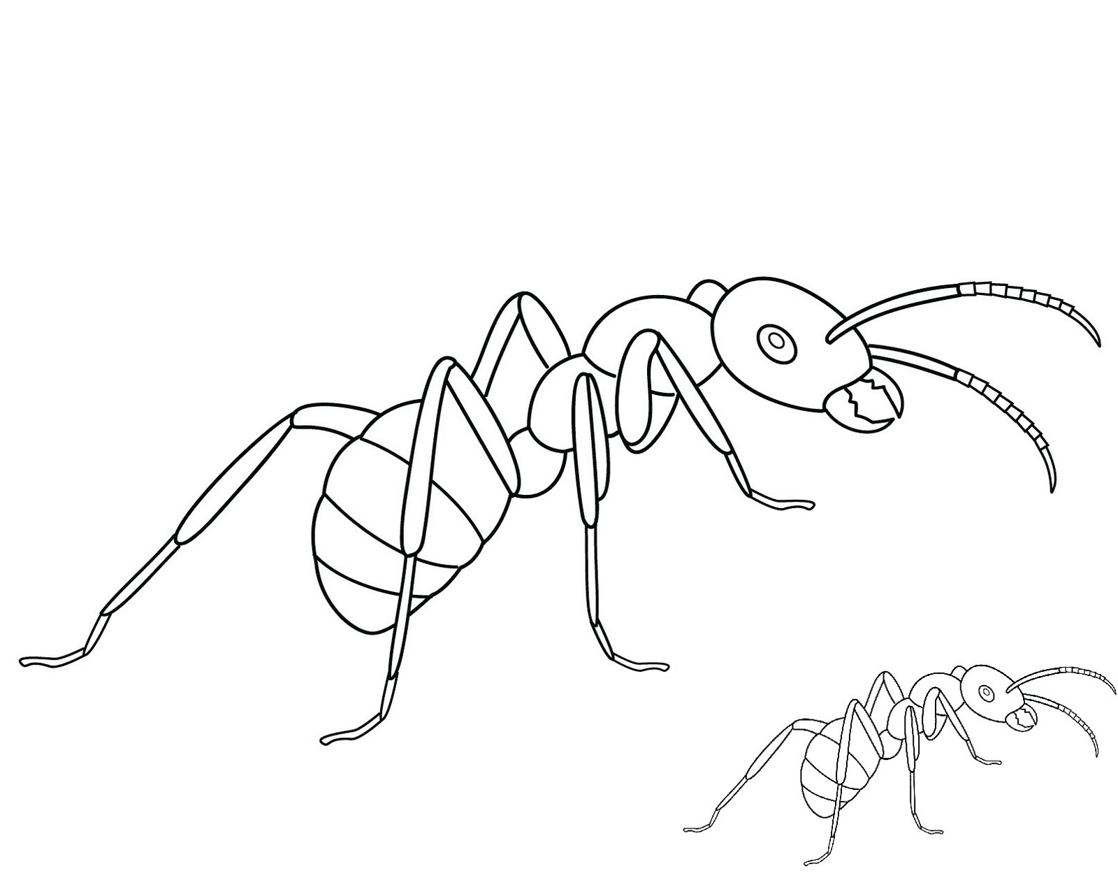 ant animal coloring pictures