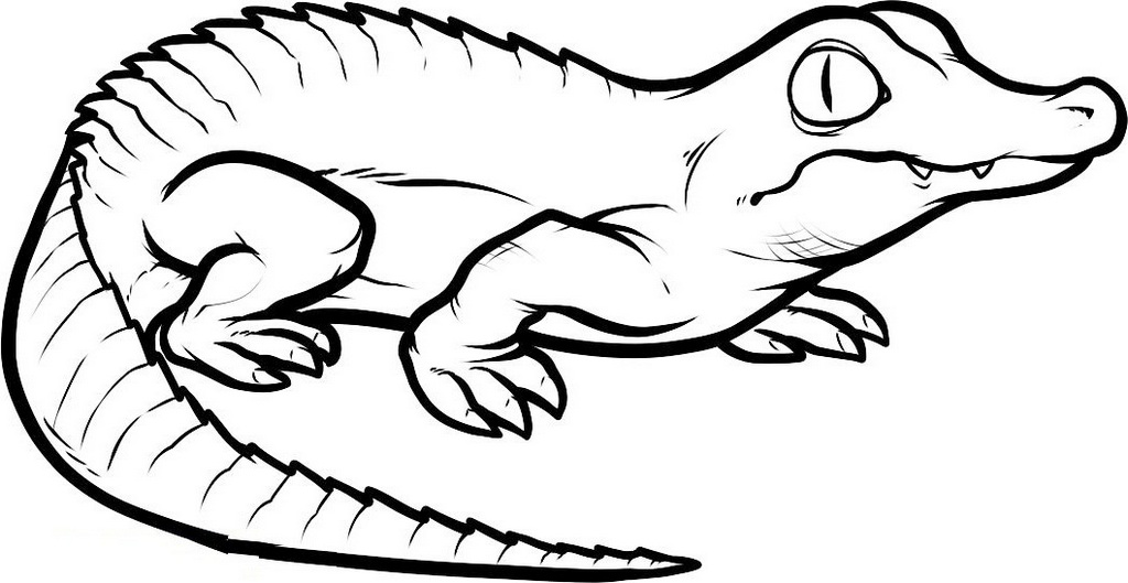 crocodile animal coloring book for kids