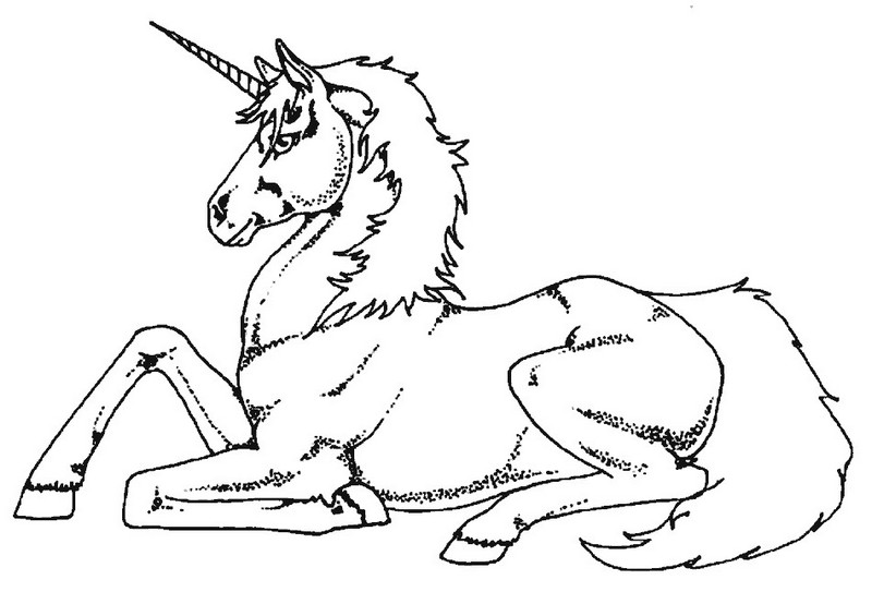 fluffy unicorn coloring book