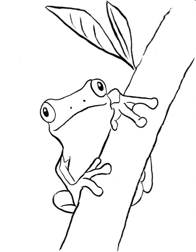 frog on the tree coloring sheet