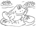 Top 12 Frog Coloring Pages for All Ages