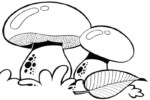 Top 11 Fascinating Mushrooms Species Coloring Pages