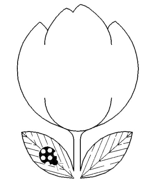 tulip coloring and drawing page