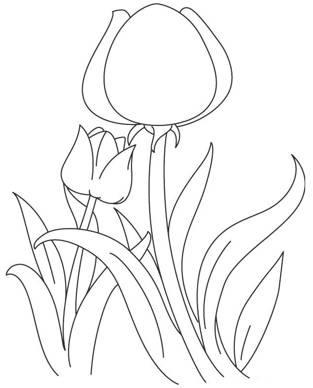 tulip spring coloring sheet printable