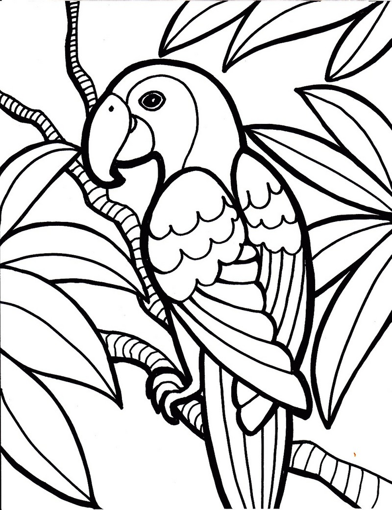 beautiful design of parrot coloring sheet