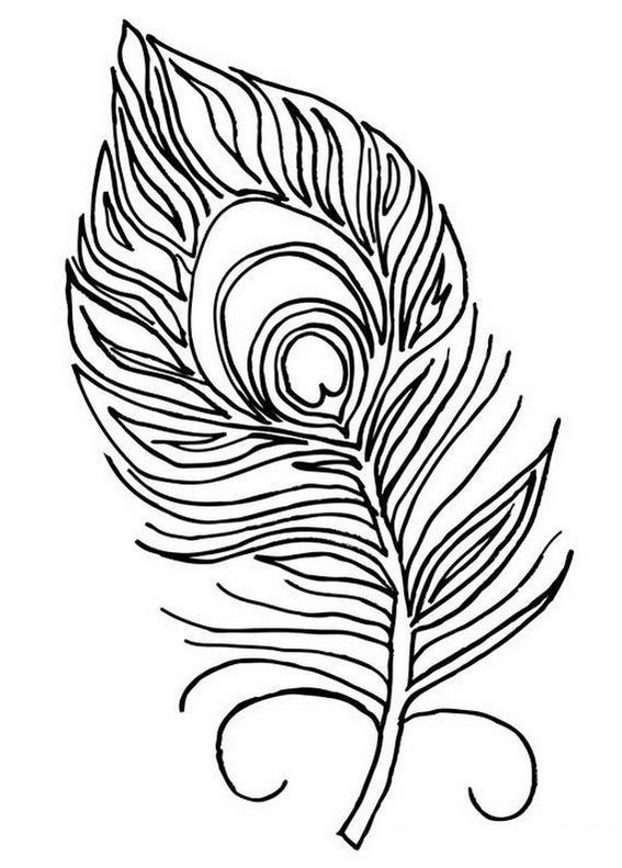 beautiful peacock feather coloring picture