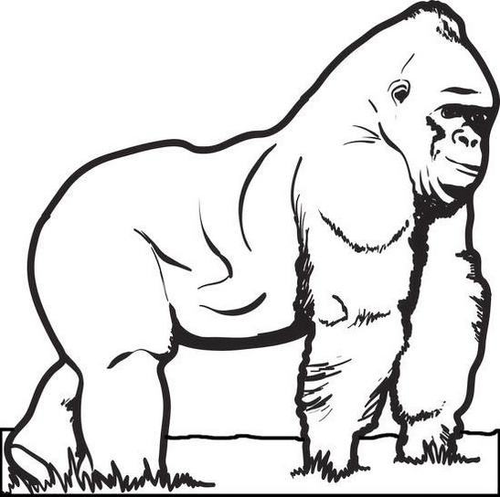 big gorilla animal coloring sheet