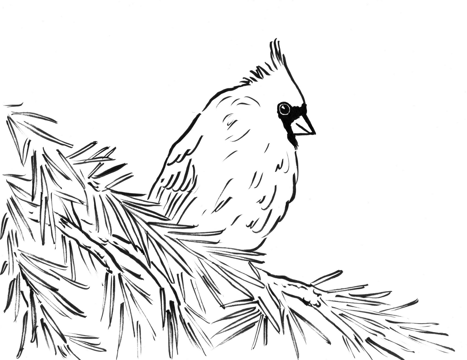 high detailed beautiful cardinal coloring page