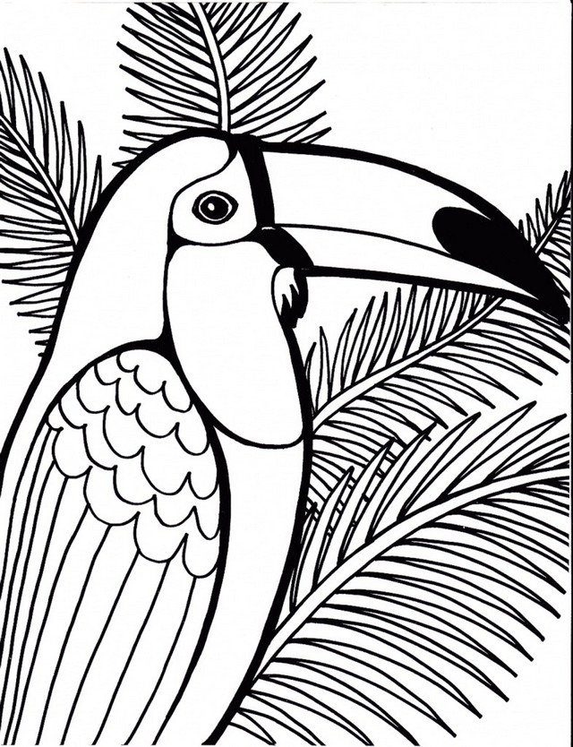 high detailed parrot coloring sheet printable