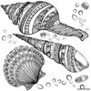 Pretty Seashell Coloring Page Designs