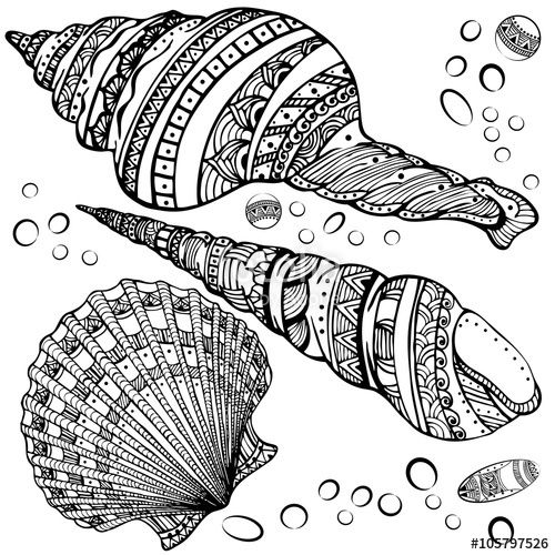 Pretty Seashell Coloring Page Designs Coloring Pages Seashell Coloring Pages