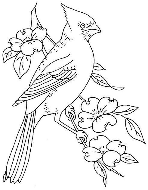 northern cardinal bird coloring page