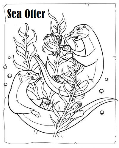 otter carnivorous mammals coloring sheet. Black Bedroom Furniture Sets. Home Design Ideas
