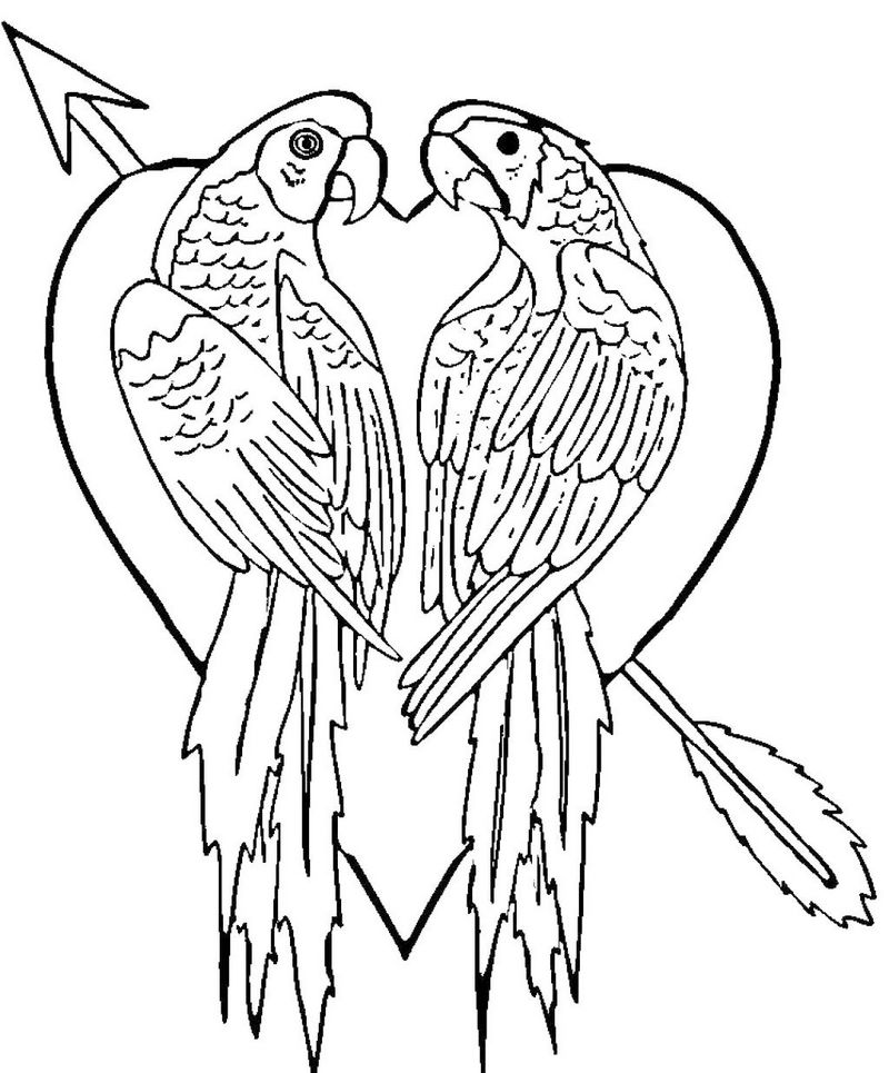 parrot loving coloring pictures