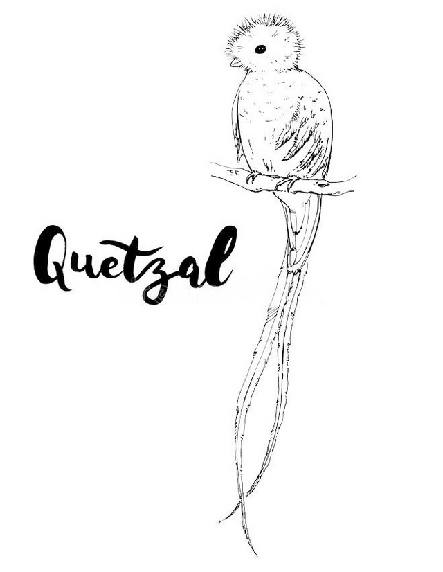 the most beautiful quetzal bird coloring picture printable
